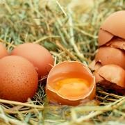 egg-1510449_1280-1